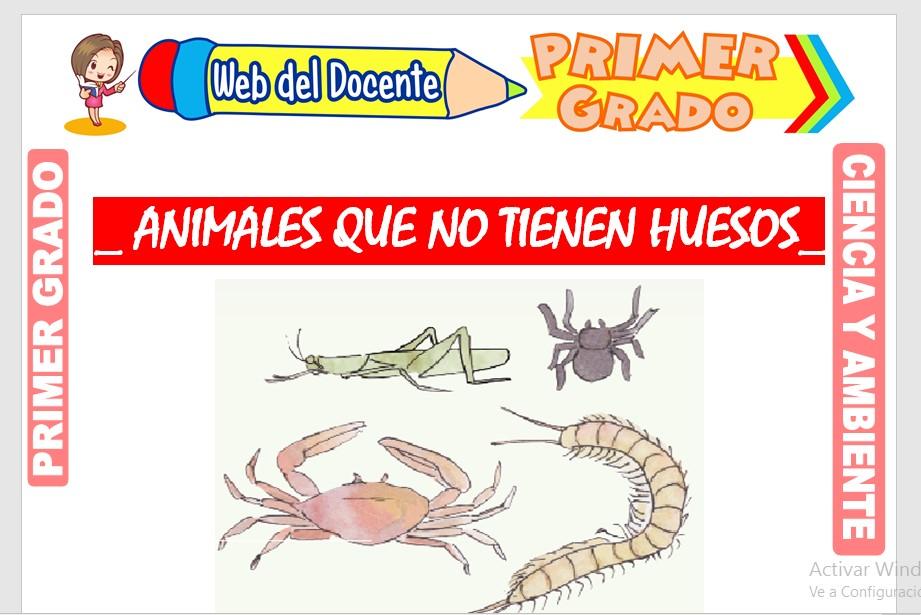 Ficha de Animales que no tienen Huesos para Primer Grado de