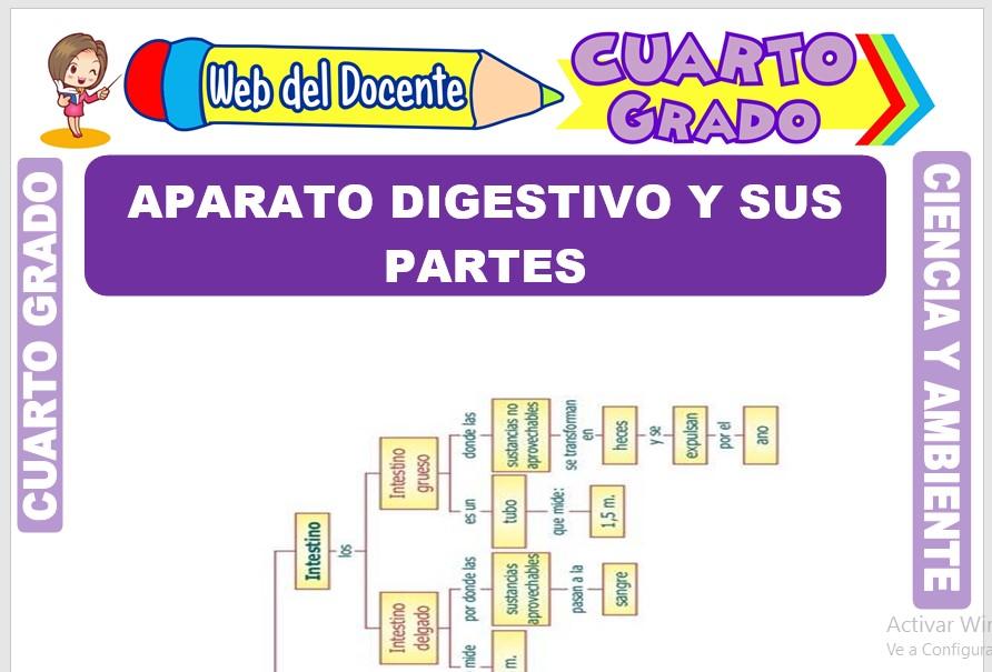 Ficha de Aparato Digestivo y sus Partes para Cuarto Grado de Primaria