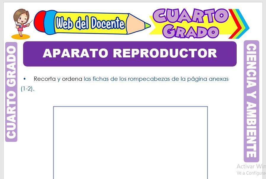 Ficha de Aparato Reproductor para Cuarto Grado de Primaria