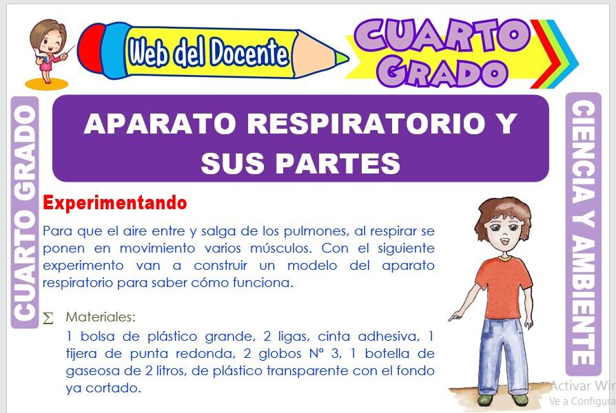 Ficha de Aparato Respiratorio y sus Partes para Cuarto Grado de Primaria