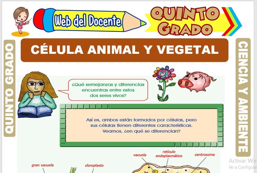 Ficha de Célula Animal y Vegetal para Quinto Grado de Primaria