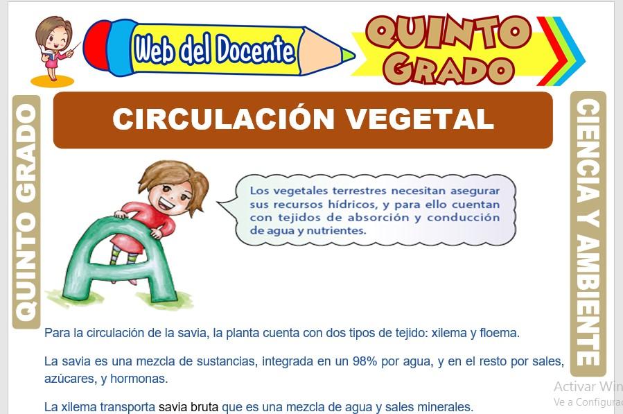 Ficha de Circulación vegetal para Quinto Grado de Primaria