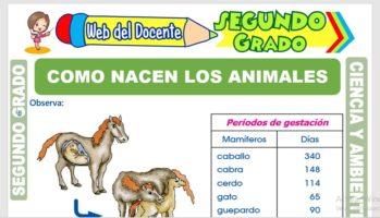 Ficha de Cómo Nacen los Animales para Segundo Grado de Primaria