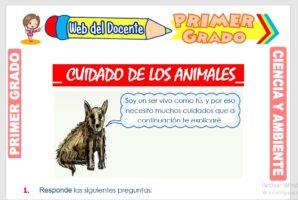 Ficha de Cuidado de los Animales para Primer Grado de Primaria
