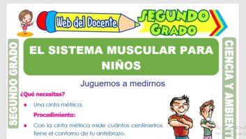 Ficha de El Sistema Muscular para Niños para Segundo Grado de Primaria