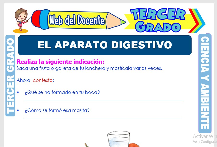 Ficha de El Aparato Digestivo para Tercer Grado de Primaria