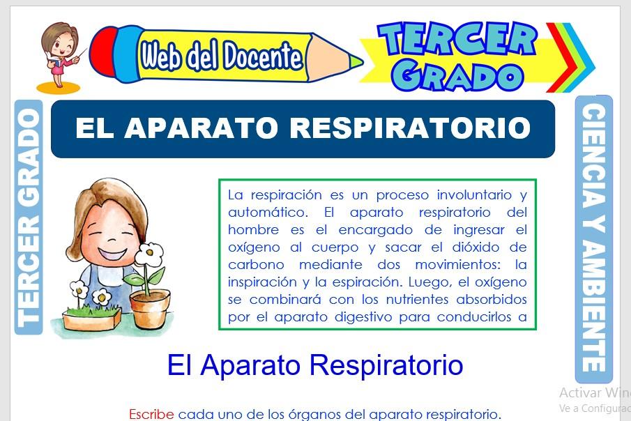 Ficha de El Aparato Respiratorio para Tercer Grado de Primaria