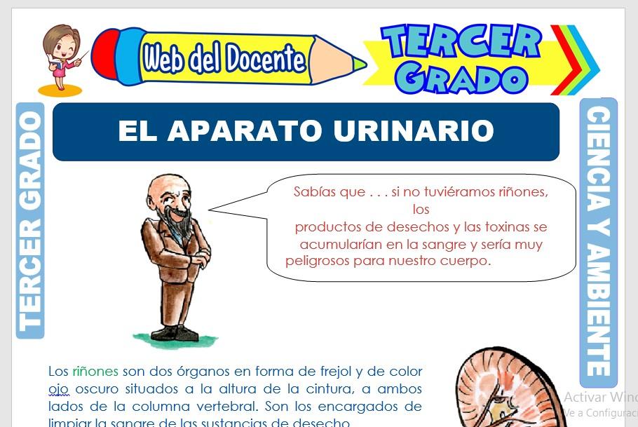 Ficha de El Aparato Urinario para Tercer Grado de Primaria