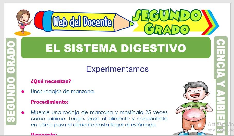 Ficha de El Sistema Digestivo para Segundo Grado de Primaria