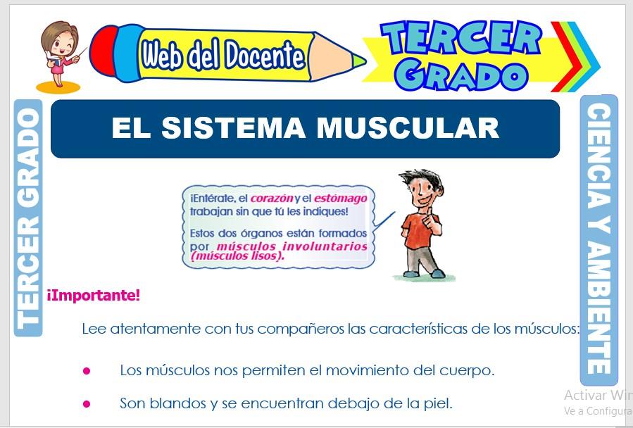 Ficha de El Sistema Muscular para Tercer Grado de Primaria
