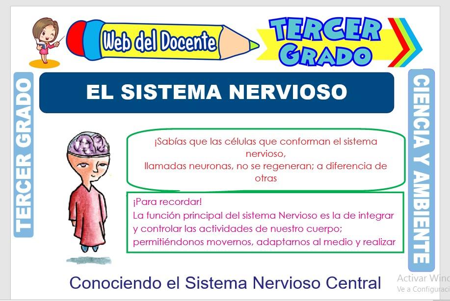 Ficha de El Sistema Nervioso para Tercer Grado de Primaria
