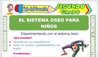 Ficha de El Sistema Óseo para Niños para Segundo Grado de Primaria