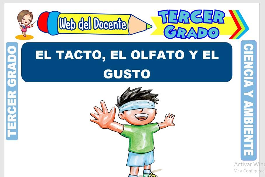 Ficha de El Tacto, el Olfato y el Gusto para Tercer Grado de Primaria