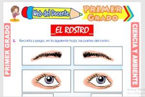 Ficha de El Rostro para Primer Grado de Primaria