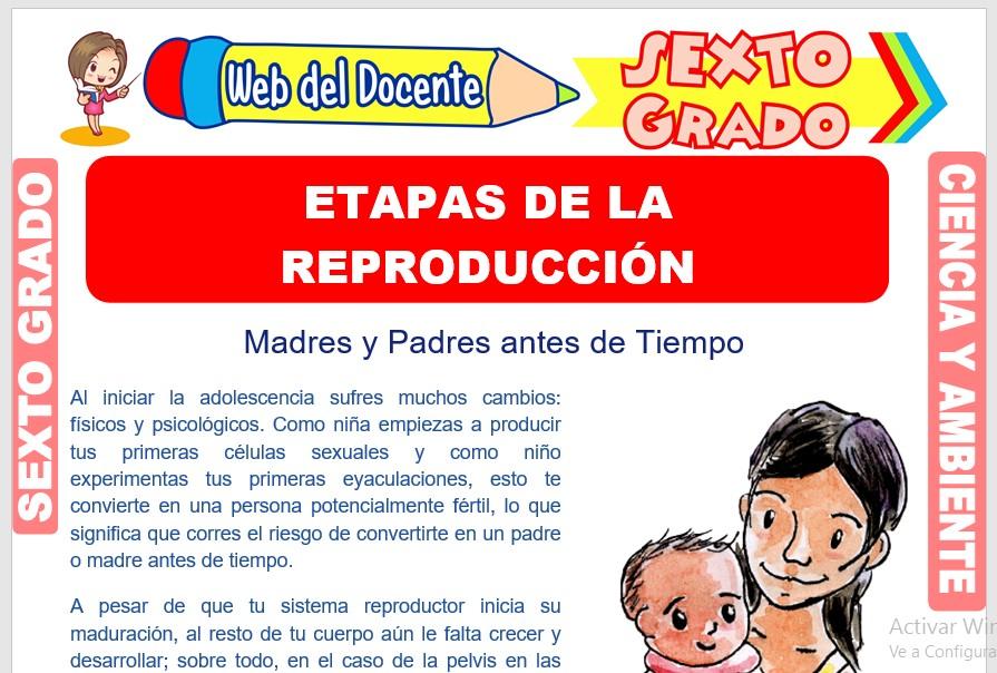 Ficha de Etapas de la Reproducción para Sexto Grado de Primaria