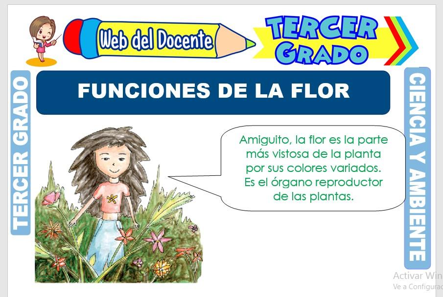 Ficha de Funciones de la Flor para Tercer Grado de Primaria