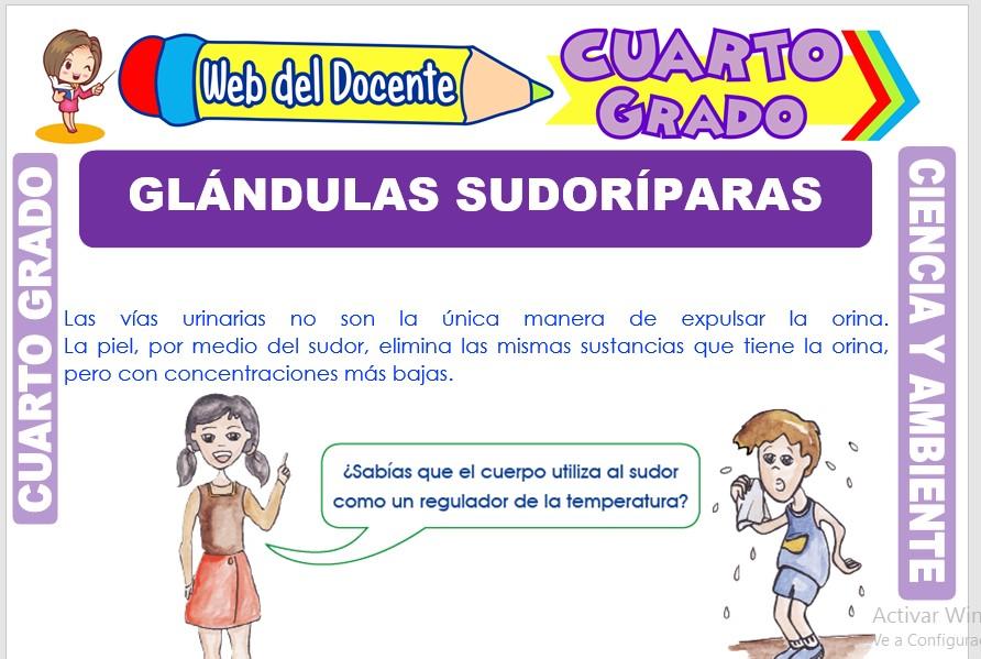 Ficha de Glándulas Sudoríparas para Cuarto Grado de Primaria