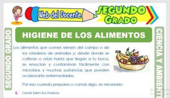 Ficha de Higiene de los Alimentos para Segundo Grado de Primaria