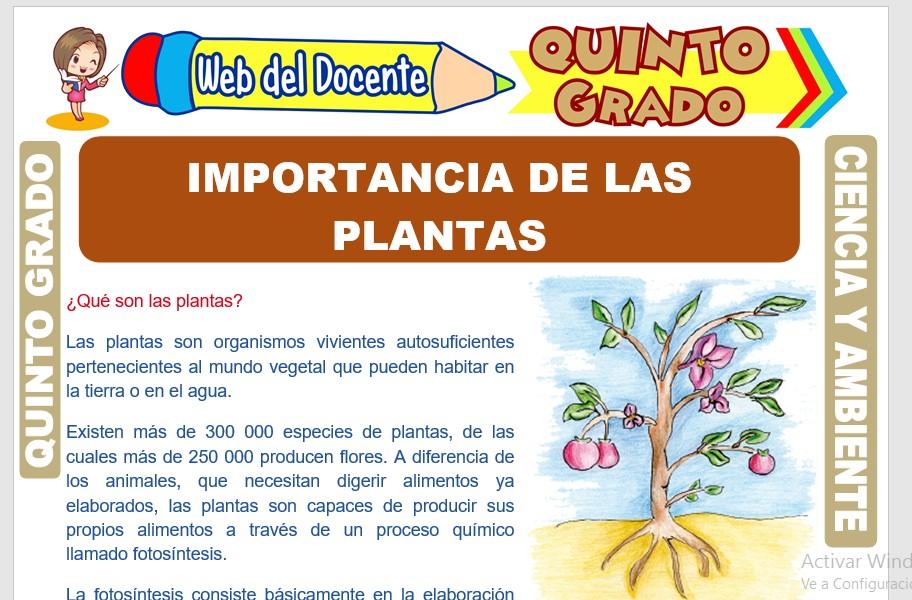 Ficha de Importancia de las Plantas para Quinto Grado de Primaria