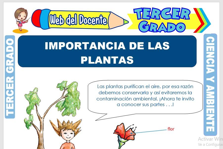 Ficha de Importancia de las Plantas para Tercer Grado de Primaria
