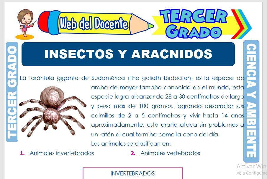 Ficha de Insectos y Arácnidos para Tercer Grado de Primaria