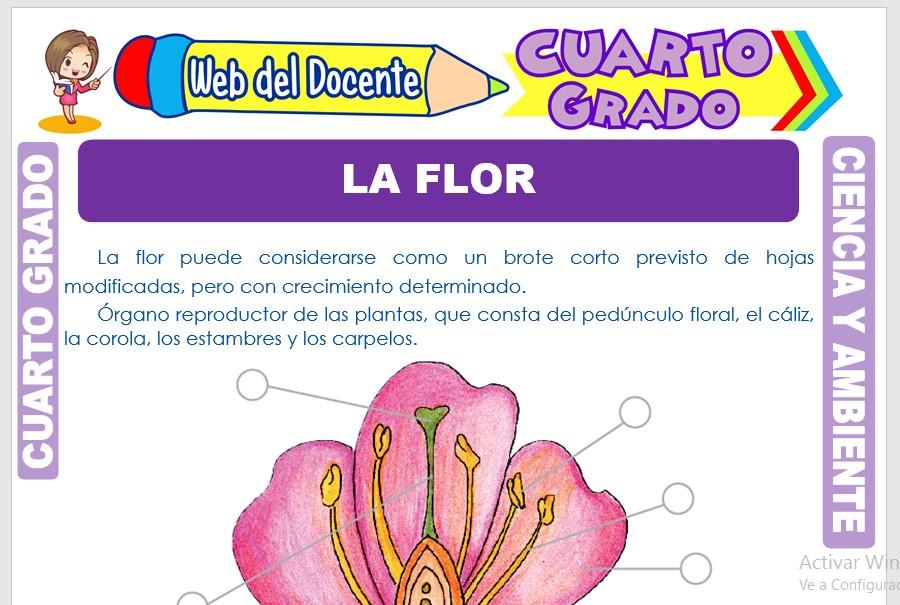 Ficha de La Flor para Cuarto Grado de Primaria