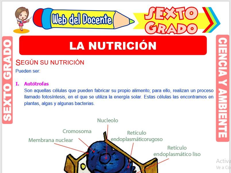 Ficha de La Nutrición para Sexto Grado de Primaria