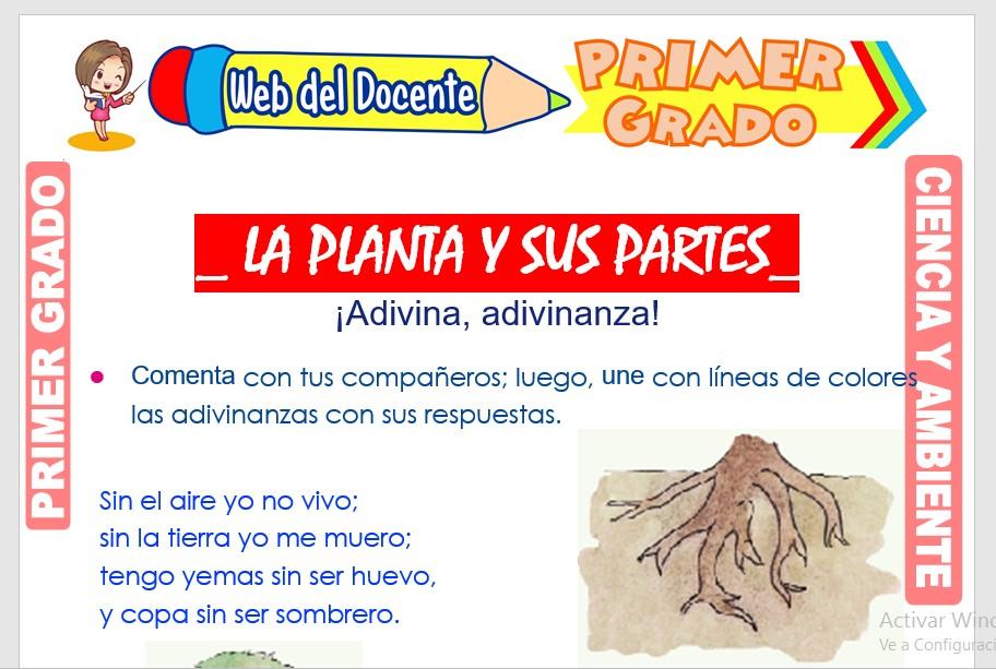 Ficha de la Planta y sus partes para Primer Grado de Primaria