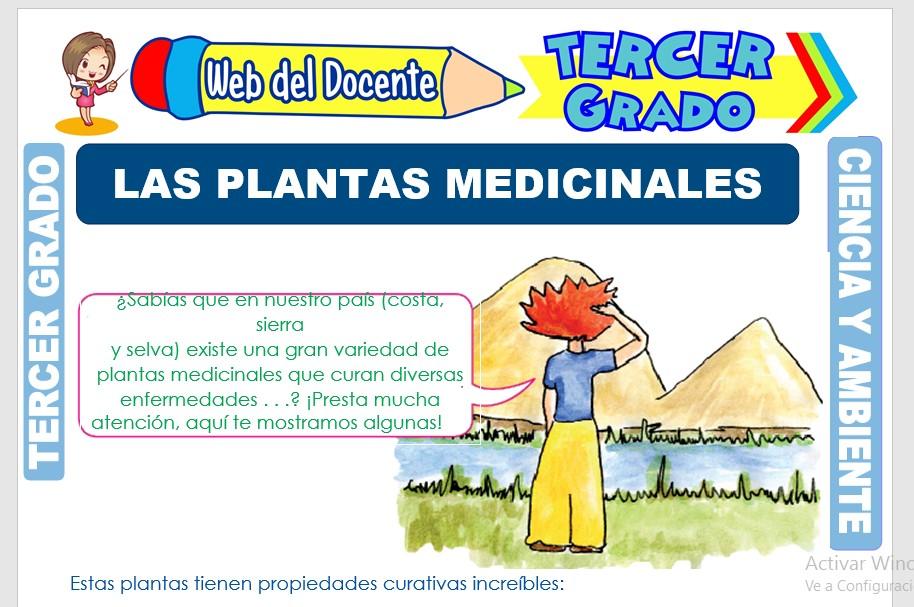 Ficha de Las Plantas Medicinales para Tercer Grado de Primaria