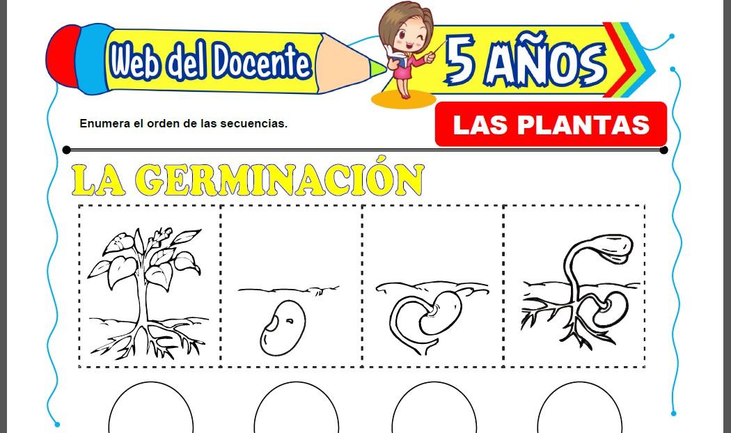 Las Plantas para Niños de 5 Años