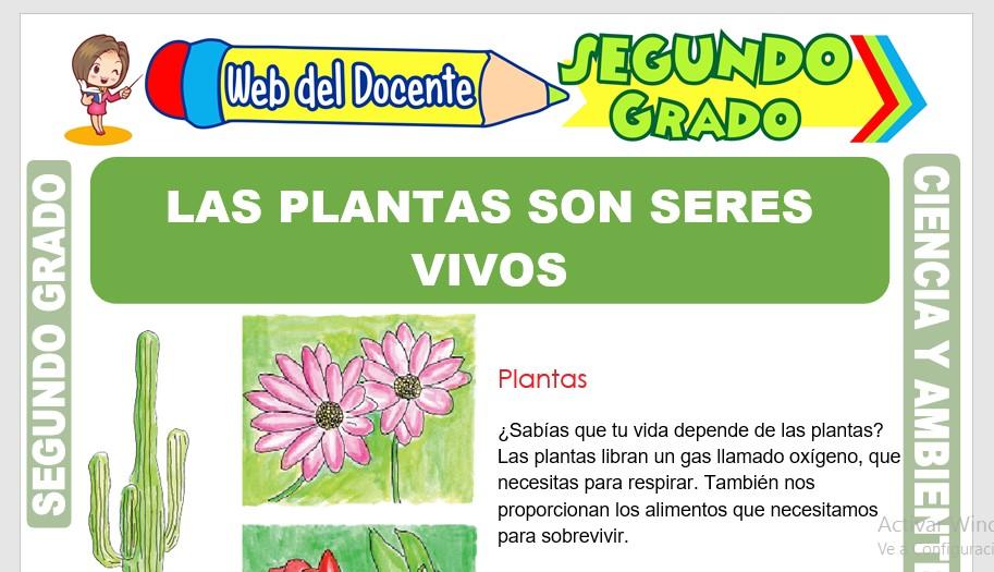 Ficha de Las Plantas son Seres Vivos para Segundo Grado de Primaria
