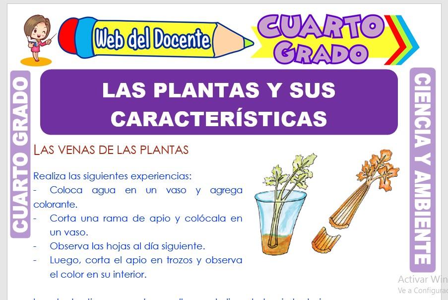 Ficha de Las Plantas y sus Características para Cuarto Grado de Primaria