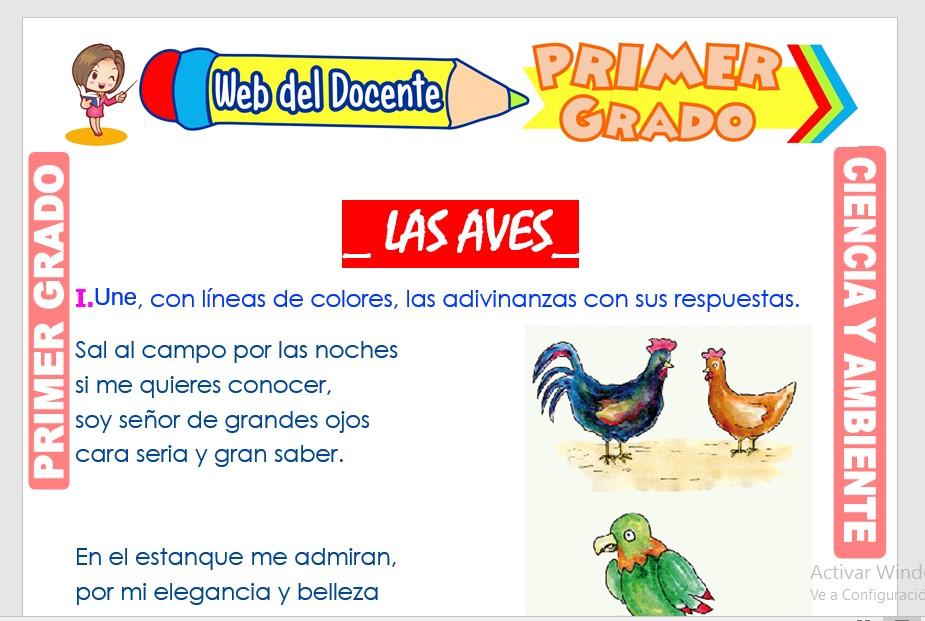 Ficha de Las Aves para Primer Grado de Primaria