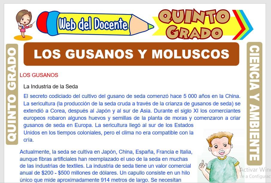 Ficha de Los Gusanos y Moluscos para Quinto Grado de Primaria