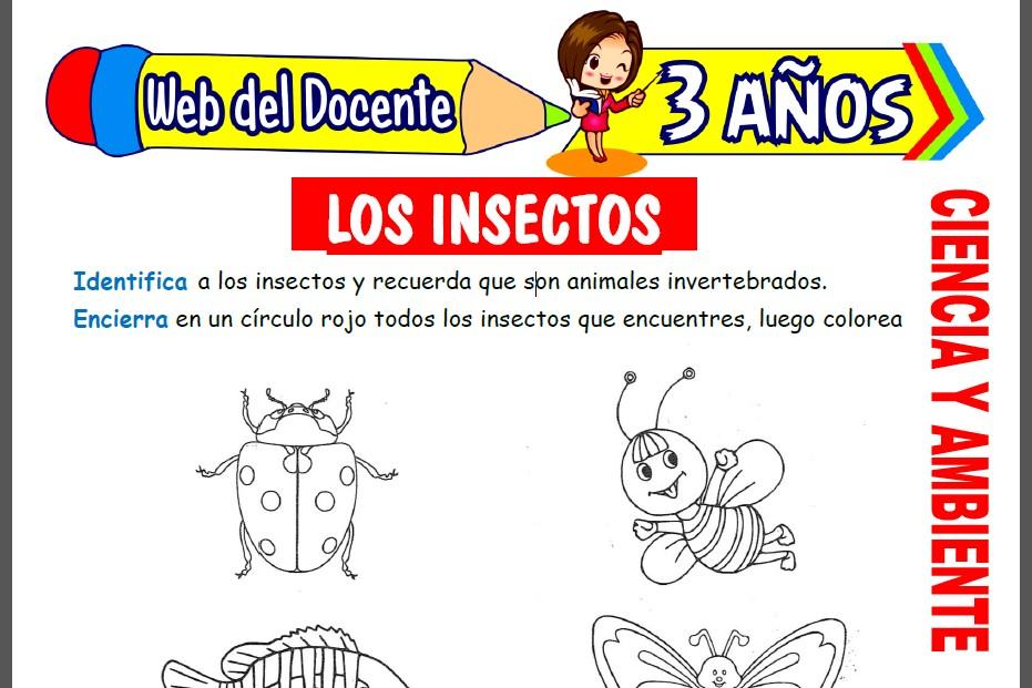 Los Insectos para Niños de 3 Años