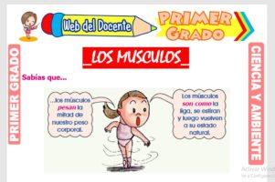 Ficha de Los Músculos para Primer Grado de