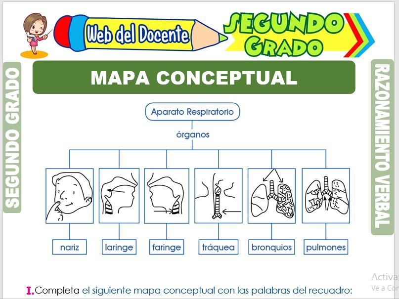 Ficha de Mapa Conceptual para Segundo Grado de Primaria