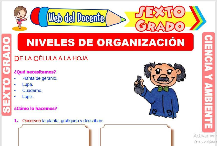 Ficha de Niveles de Organización para Sexto Grado de Primaria