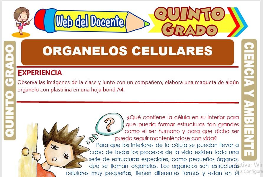 Ficha de Organelos Celulares para Quinto Grado de Primaria