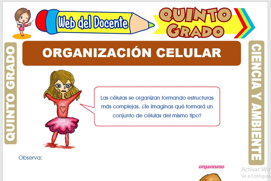 Ficha de Organización Celular para Quinto Grado de Primaria