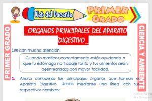 Ficha de Órganos Principales del Aparato Digestivo para Primer Grado de Primaria