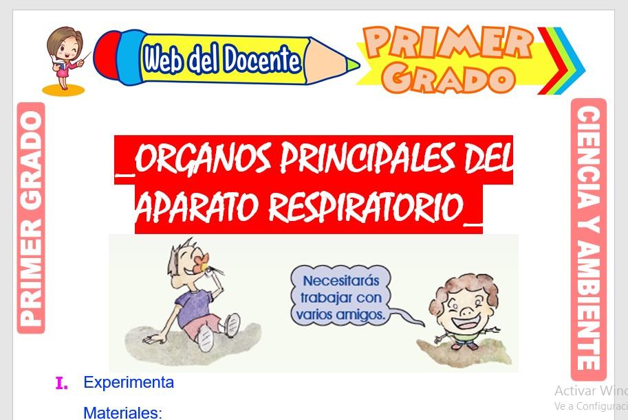 Ficha de Órganos Principales del Aparato Respiratorio para Primer Grado de Primaria