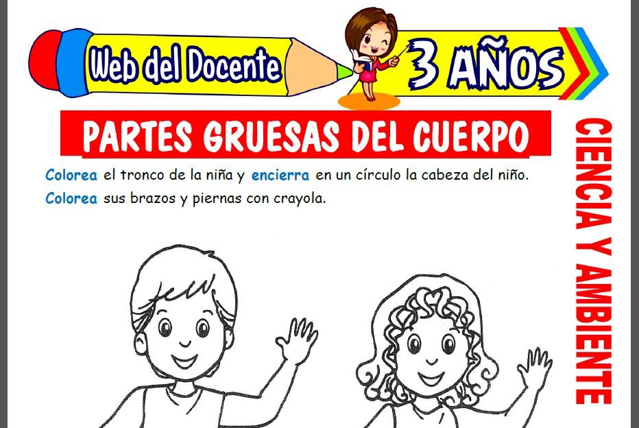 Partes Gruesas del Cuerpo para Niños de 3 Años