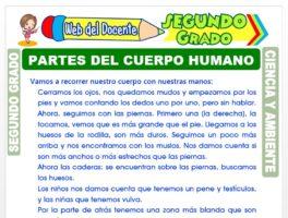 Ficha de Partes del Cuerpo Humano para Segundo Grado de Primaria