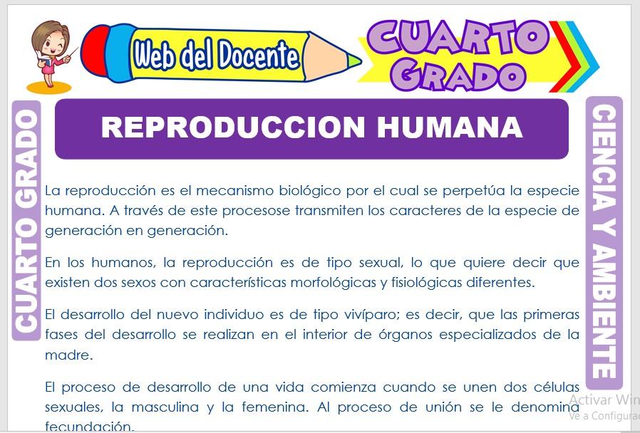 Ficha de Reproducción Humana para Cuarto Grado de Primaria