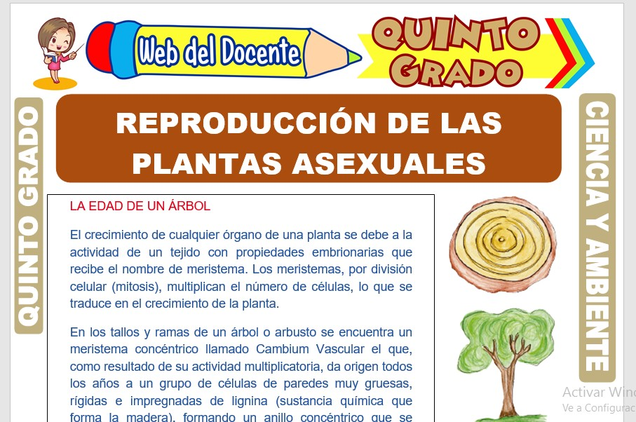 Ficha de Reproducción de las Plantas Asexuales para Quinto Grado de Primaria