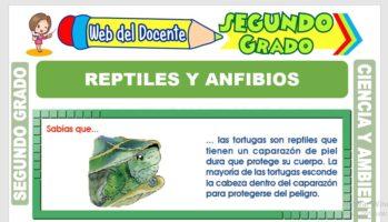 Ficha de Reptiles y Anfibios para Segundo Grado de Primaria