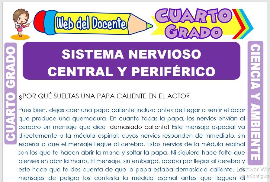 Ficha de Sistema Nervioso Central y Periférico para Cuarto Grado de Primaria