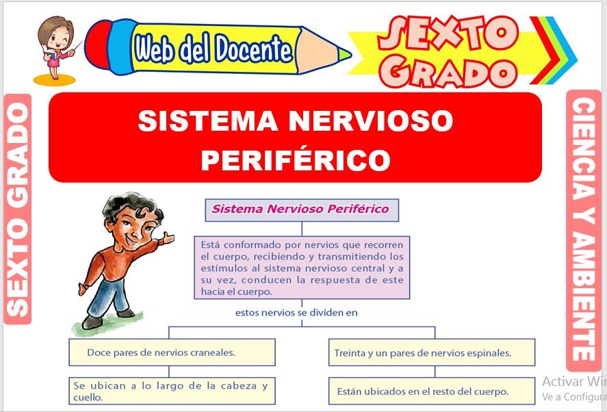 Ficha de Sistema Nervioso Periférico para Sexto Grado de Primaria