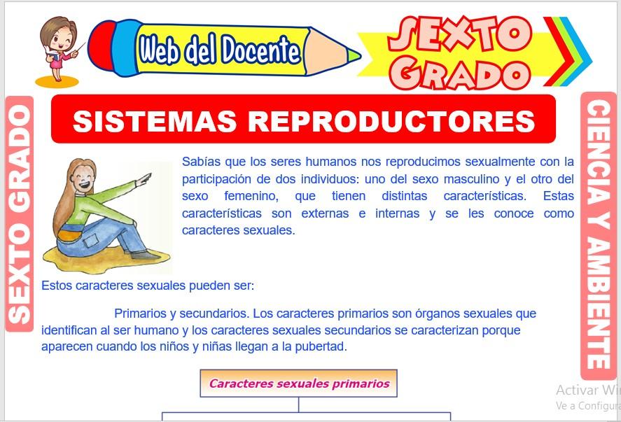 Ficha de Sistemas Reproductores para Sexto Grado de Primaria